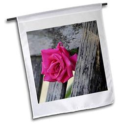 3dRose Stamp City - Flowers - Photograph of a Pink Rose Grow